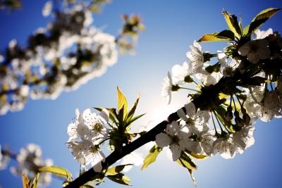 Alergickú reakciu netreba podceňovať, poškodzuje organizmus.